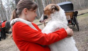 В Барнауле всего 12 русских псовых борзых, 5 из них участвовали в представлении.