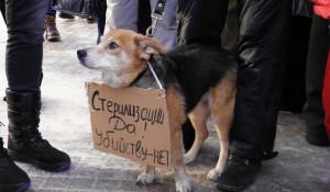 Пикет против убийства бездомных собак. Барнаул, 27 января 2013г.