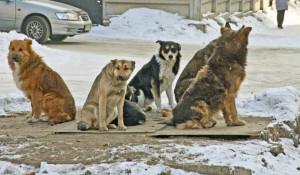 Бездомные животные в Барнауле.