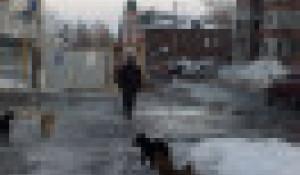 Бездомные собаки в Барнауле.