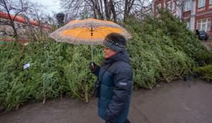 Продажа елок в Барнауле.