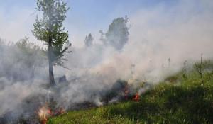 Лесные пожары на Алтае.