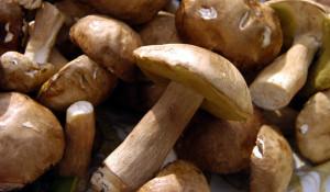 Поход в лес за грибами окончился трагедией.