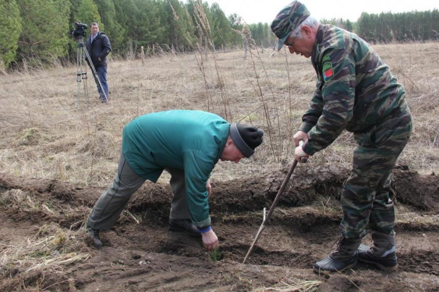 170 тысяч сеянцев двухлетней сосны, выращенной в лесном питомнике высокой культуры Угловского района Алтайского края, высадили в Кемеровской области.