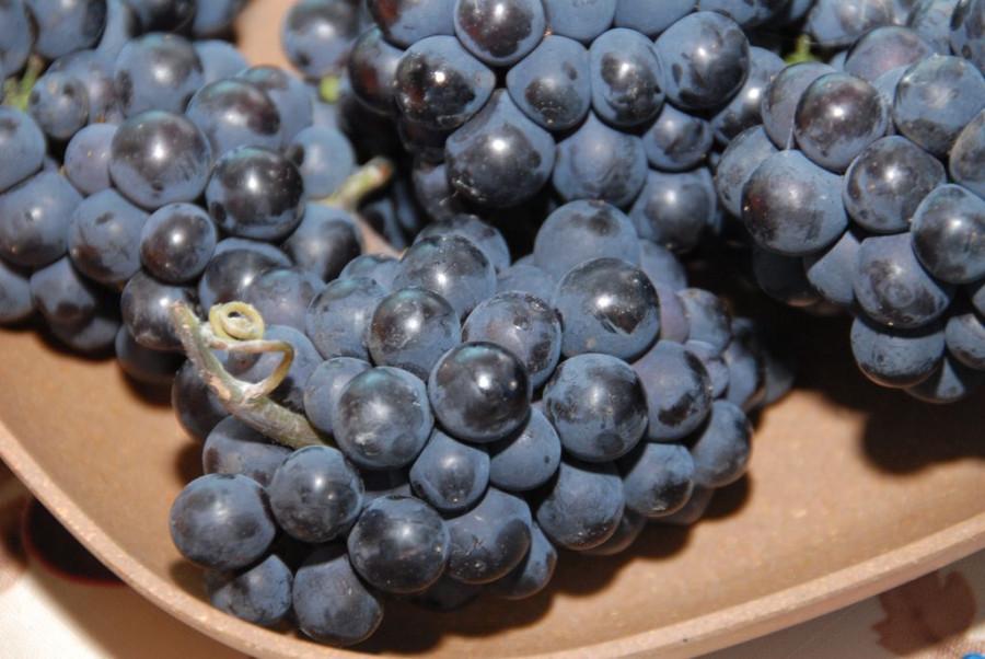 Алтайский виноград.