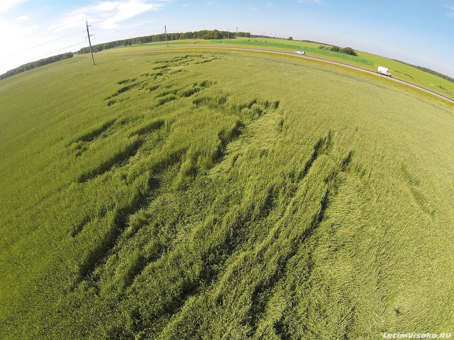 Таинственные круги появились на пшеничном поле под Троицком. Алтайский край, 1 июля 2014 года.