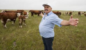 Свое мясное стадо Валерий Абронов считает лучшим в Алтайском крае.