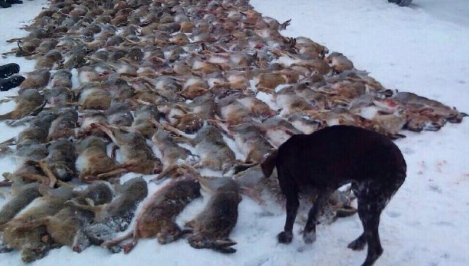 Участниками браконьерской бойни были главы двух районов Кубани и трое судей краевого суда.