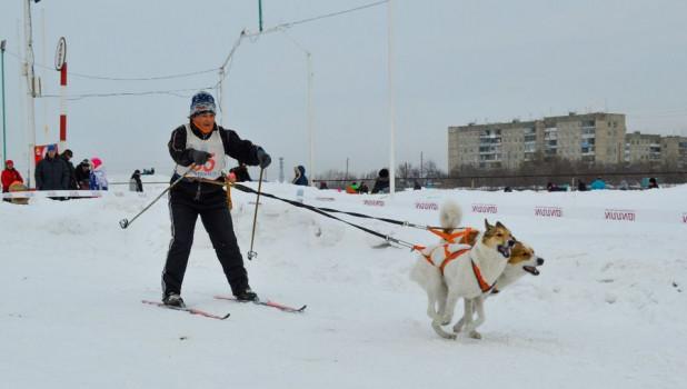 Кто быстрее буксирует лыжника – лошадь, собаки или мотоцикл: выясняли на любительских соревнованиях по скиджорингу в Барнауле.