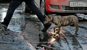 Вешние воды в первый день весны. Барнаул, 1 марта 2015 года.