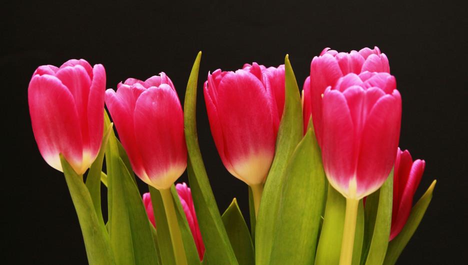 Тюльпаны. Цветы.