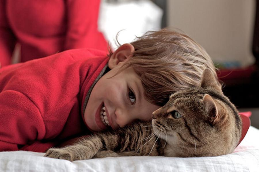 Дети и кошки - лучшее сочетание для интернетного фото.