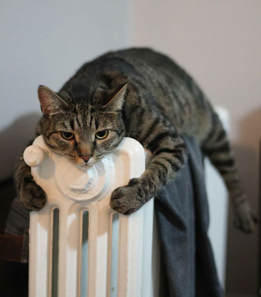 Животные, которые любят тепло.