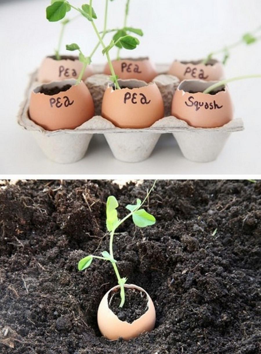 Используй яичную скорлупу для выращивания рассады и удобрения почвы (разбрасывай измельченную скорлупу по участку).