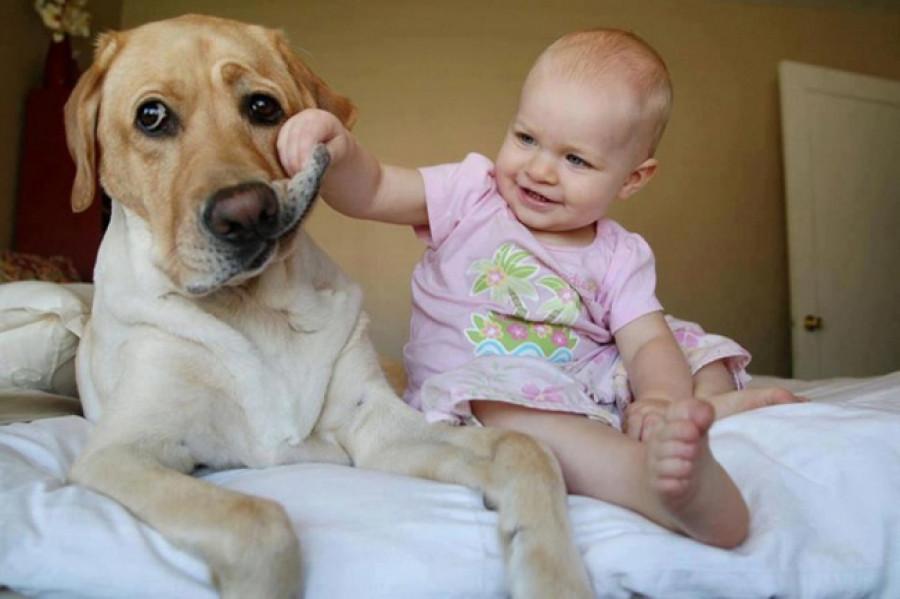 Дети и звери.