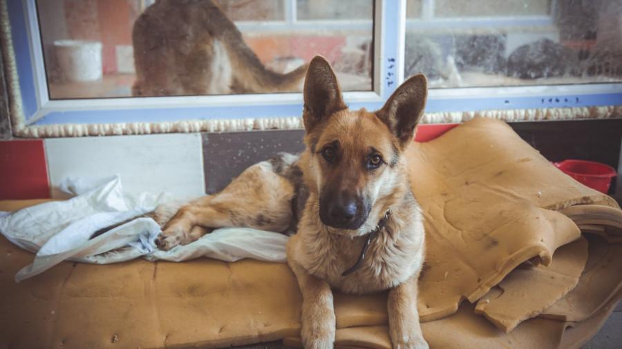 «Они отгрызают себе лапы». Почему в Барнауле приюты отпускают собак, а закон о домашних животных требует доработки - фото 10