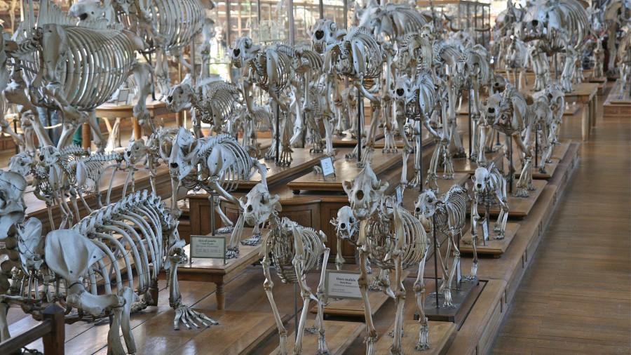 Скелеты. Вымирание видов.
