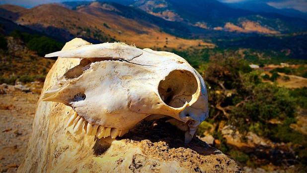 Череп. Вымирание видов.