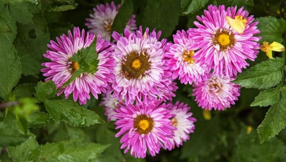 Цветы.