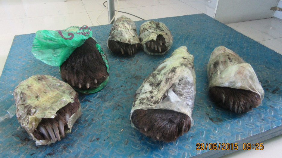 На таможенном посту ЖДПП Забайкальск в вагоне с лесом обнаружено  6 лап медведя.