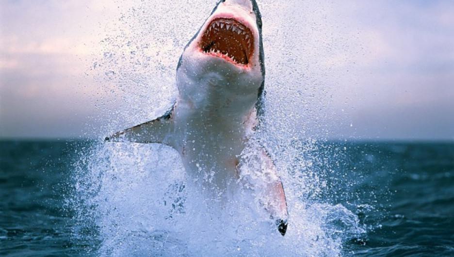 Зуб гигантской акулы преподнесли в дар Кадырову