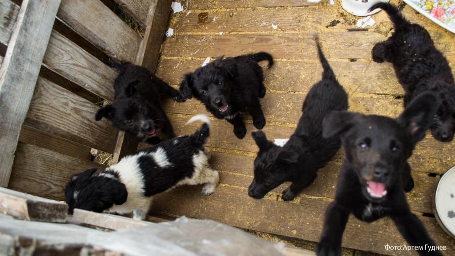 «Они отгрызают себе лапы». Почему в Барнауле приюты отпускают собак, а закон о домашних животных требует доработки - фото 5