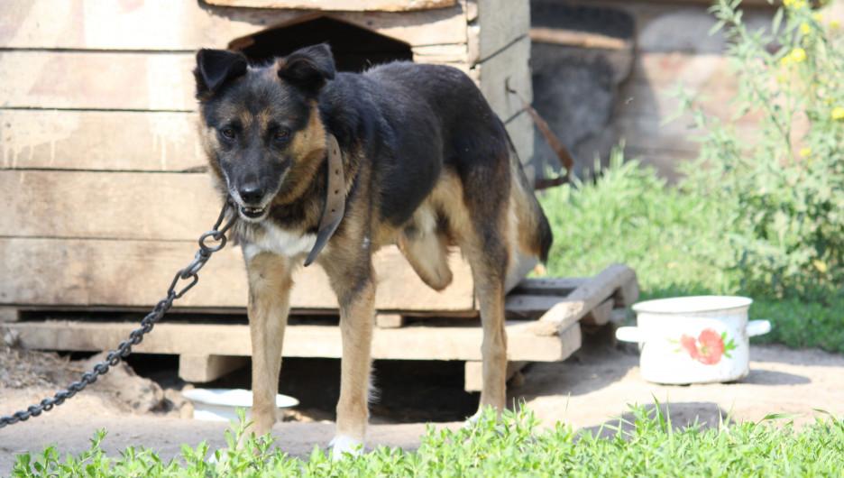 «Они отгрызают себе лапы». Почему в Барнауле приюты отпускают собак, а закон о домашних животных требует доработки - фото 2