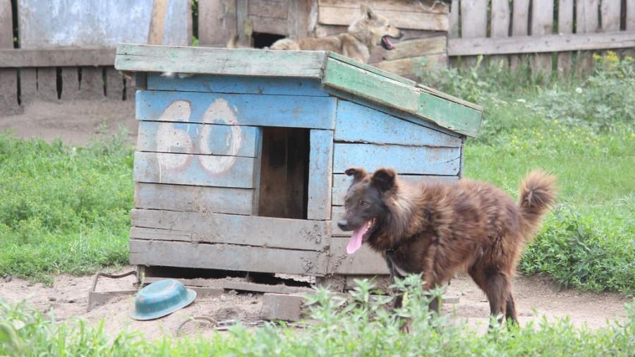 «Они отгрызают себе лапы». Почему в Барнауле приюты отпускают собак, а закон о домашних животных требует доработки - фото 12