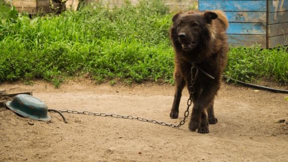 """Крестник - первый пес в новом здании приюта """"Ласка""""."""
