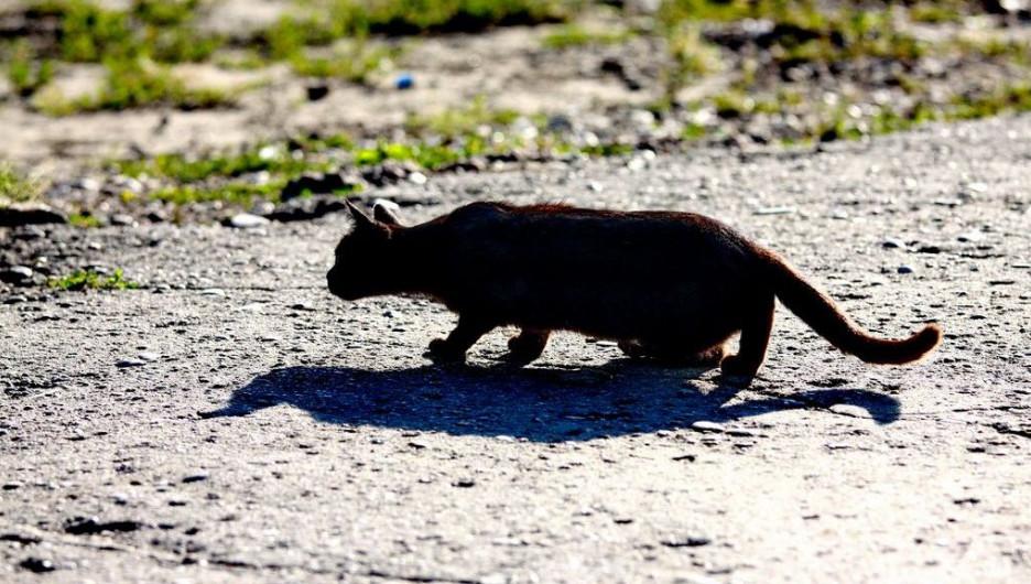 Черная кошка и куча суеверий.
