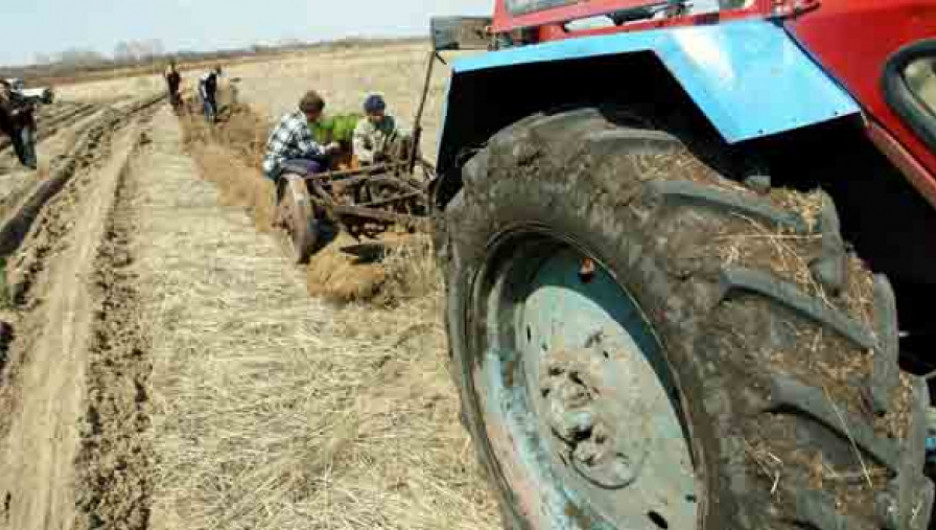 Сельское хозяйство.