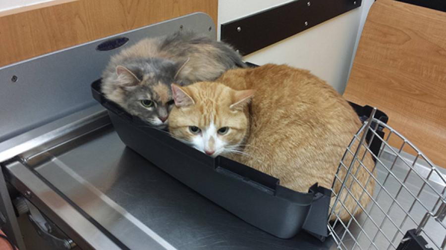 Котики в гостях у ветеринаров.