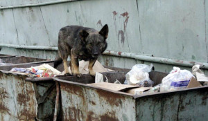 Бездомная собака.