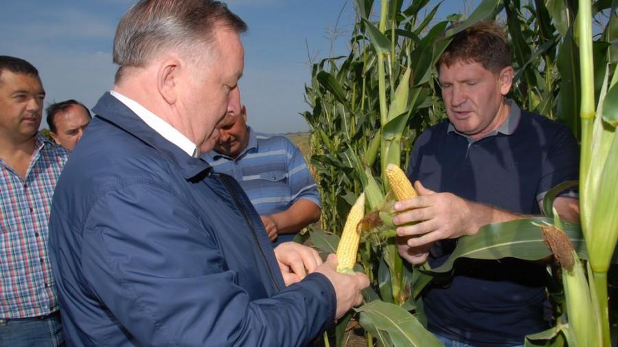 Александр Карлин в полях кукурузы.