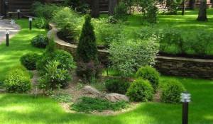 За посадку растений-крупномеров, саженцев деревьев и кустарников Dream Garden берет 50% от стоимости посадочного материала.
