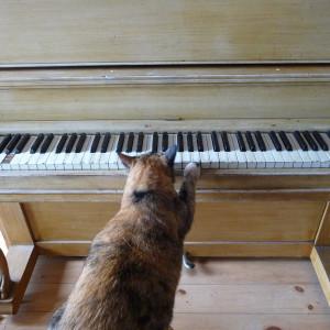 А почему бы не поиграть на пианино?