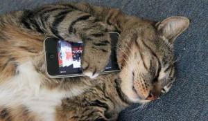 Кот и смартфон.