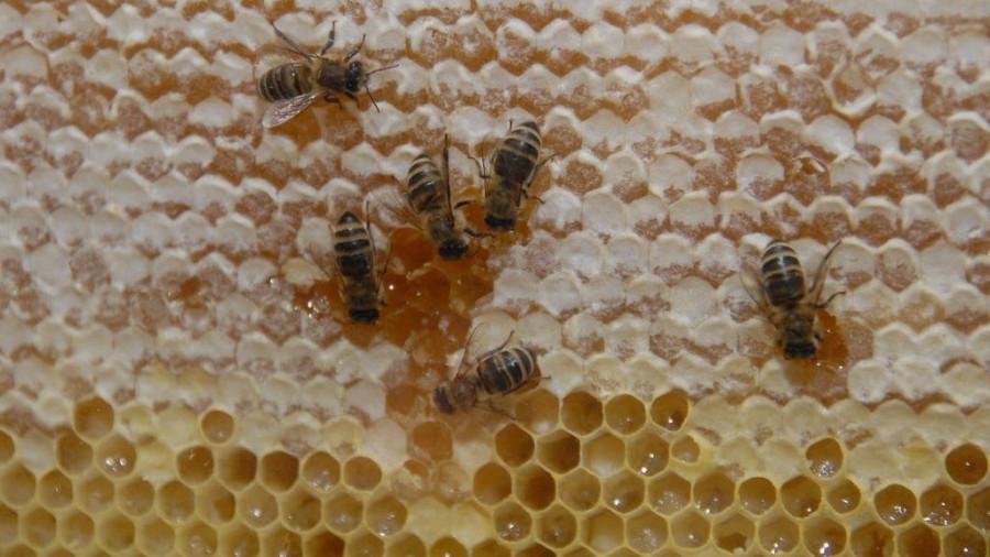 Мед. Пчелы.