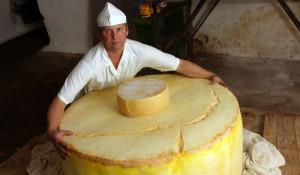 Большой алтайский сыр.