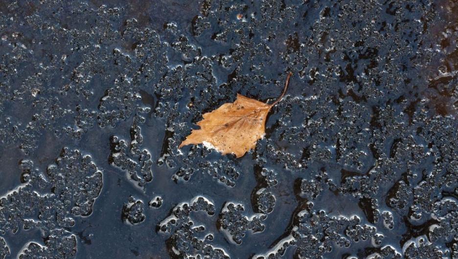 Осенние листья Барнаула.