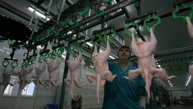 Производство. Мясо курицы.