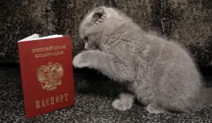 Котенок и паспорт.