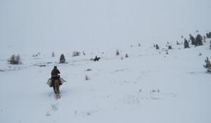 Аномальные снегопады угрожают популяции козерогов.