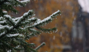 Снег и дождь.