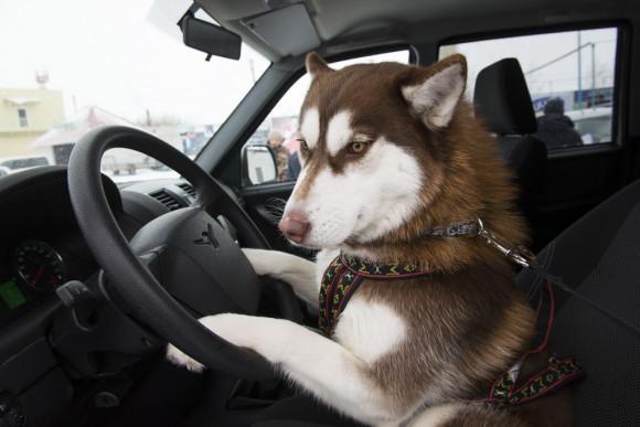 """Компания """"Автомагистраль"""" выступила партнером гонки на собачьих упряжках """"Стрела Ульгеня-2015""""."""