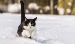 Кошка и снег.