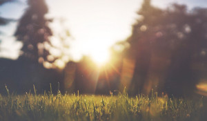Лето. Солнце. Поляна.