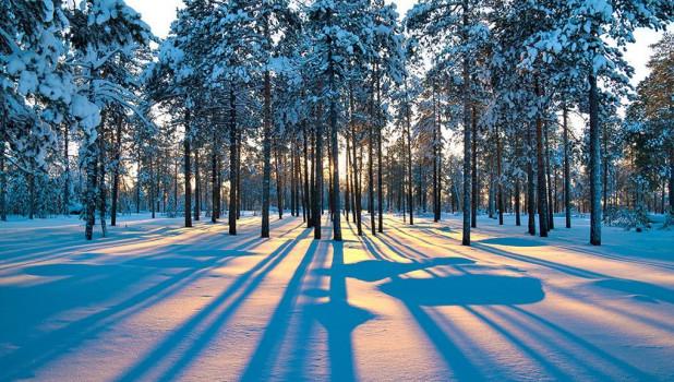 Зима. Снег в лесу.