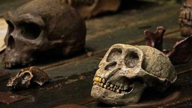 Кости, человеческие черепа.
