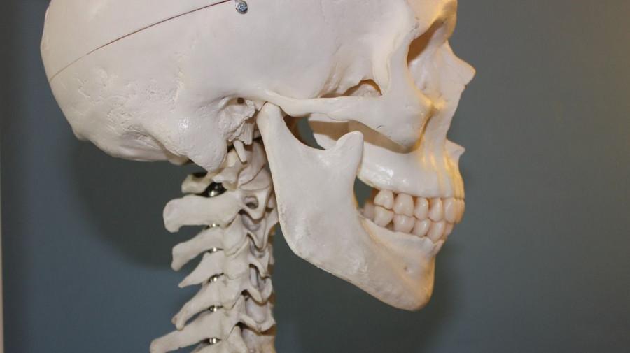 Человеческий череп, кости.
